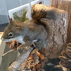 mobile_exhibit_winter_squirrel_252x252
